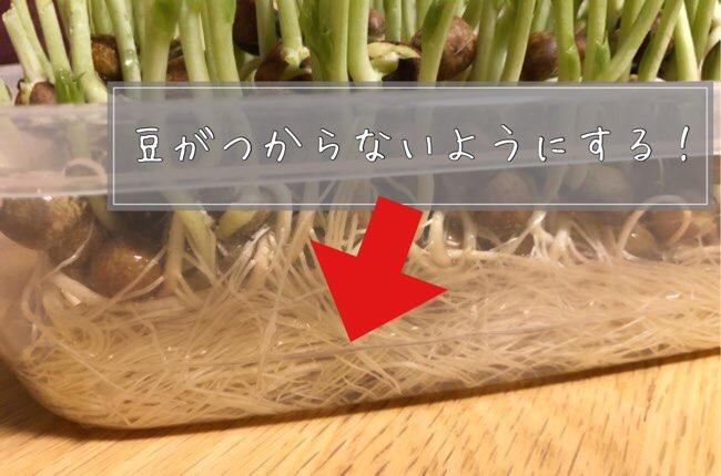 豆苗の再生コツ